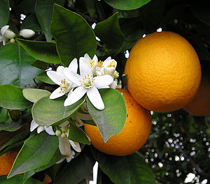 orange can use